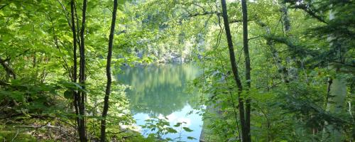 lake through woods