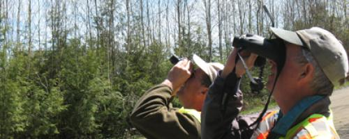 looking into trees with binoculars