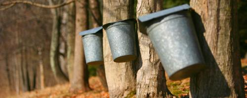 maple syrup buckets